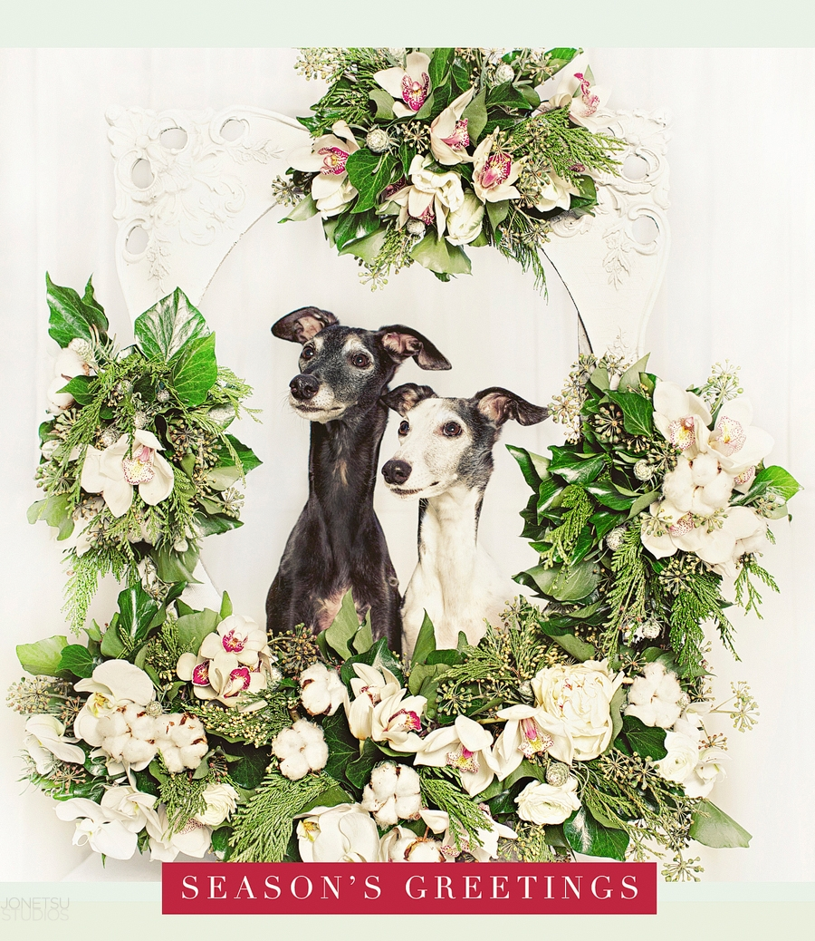 Mya and NiNi whippets inside our antique frame, florals by the ever-talented and gracious Gloria & her team at Flower Factory.  Gloria also did our wedding flowers almost 12 years ago :)